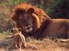 Réserve africaine : pour l'amour des animaux sauvages