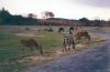Réserve africaine : La réserve de bad\'