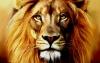 Réserve africaine : Territoire des lions