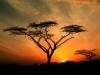 Réserve africaine : la réserve de mizako