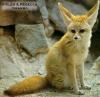 sos-animaux-xxx - joueur Lionzer
