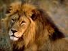 laurena65 - joueur Lionzer