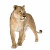 miel1711 - joueur Lionzer