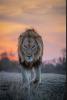 noisettequincy - joueur Lionzer