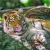 Amoureuse des Tigres