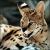 ~~ Le Serval ~~