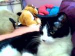 Jeffy - Chat Mâle (4 ans)