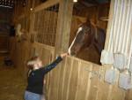 Cheval horsey - Femelle (4 ans)