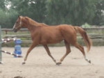Cheval Locanto - Mâle (3 mois)