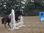 Cheval moi est mon euskadie en train de sauter un obstacle - Mâle (22 ans)