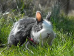 Twiny 1 - Lapin nain (4 ans)