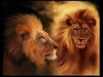 Lion le beau -  Mâle (5 ans)