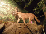 Stuffed Cougar - (Autre)