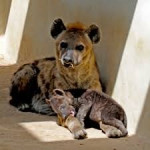 madre e hijo jugando -