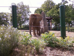The Elephant at a zoo -