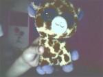 Girafe jirafin -  Femelle (5 mois)