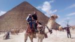 Dromadaire Camel -  Mâle (Vient de naître)